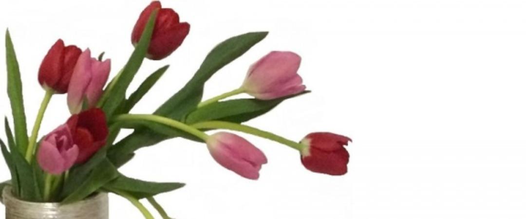 tulips sized
